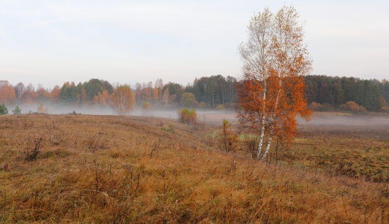 Осень..photo preview