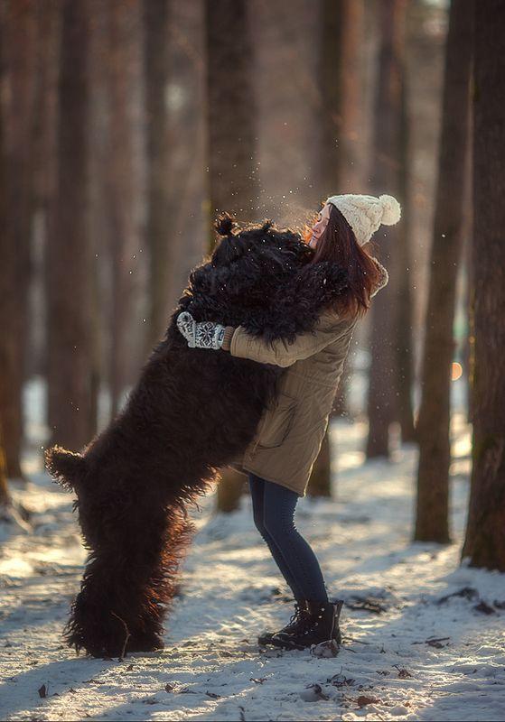 друг, собака, черный терьер, прогулка, Другphoto preview