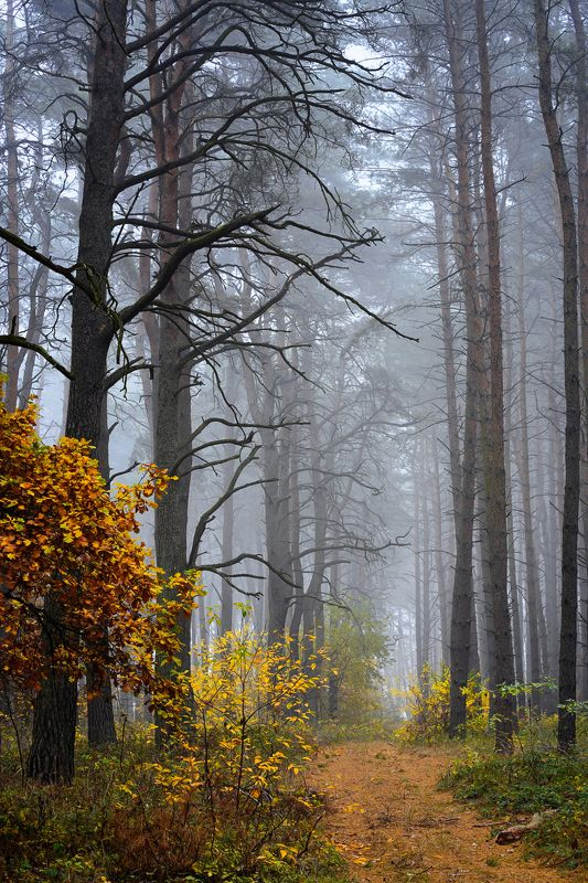 autumn walk in forest path magic mist road fall trees foggy silence Autumn walk in forestphoto preview