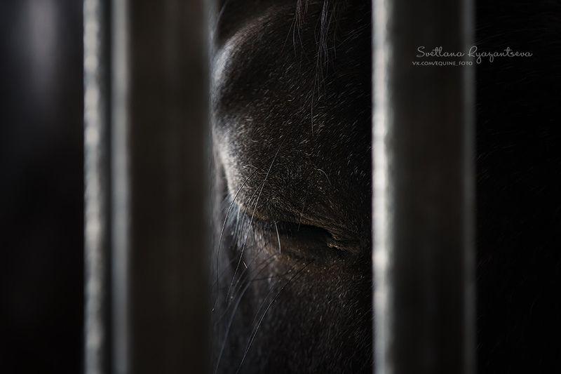 horse, лошадь, лошади, portrait sadnessphoto preview