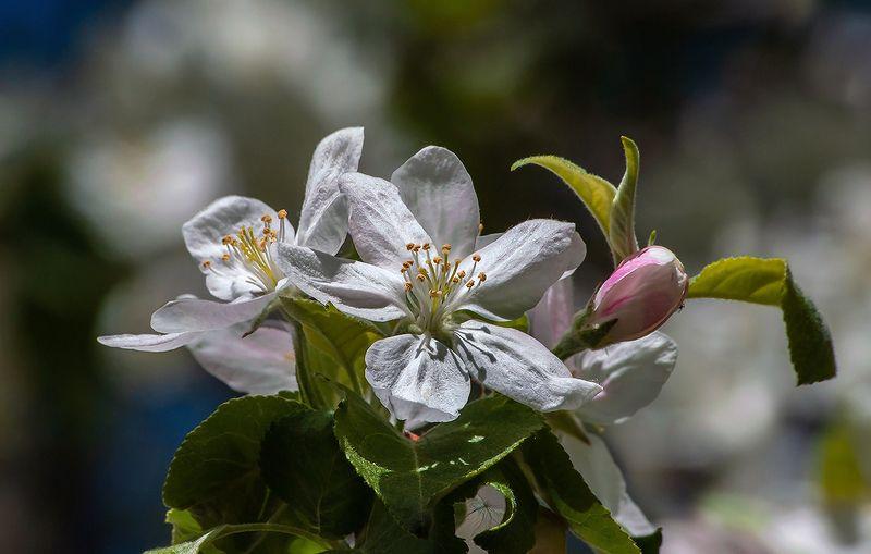 весна, поздравления, цветущий сад, яблоневый цвет, вишня в цвету, 8 марта, женский день С праздником 8 марта!photo preview