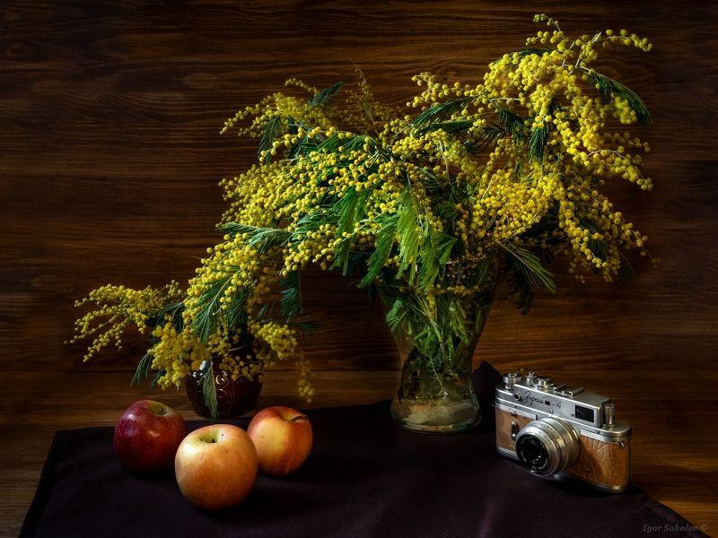 8 марта, поздравление, цветы, мимозы, march 8, congratulations, flowers, mimosa, С 8 Марта!photo preview