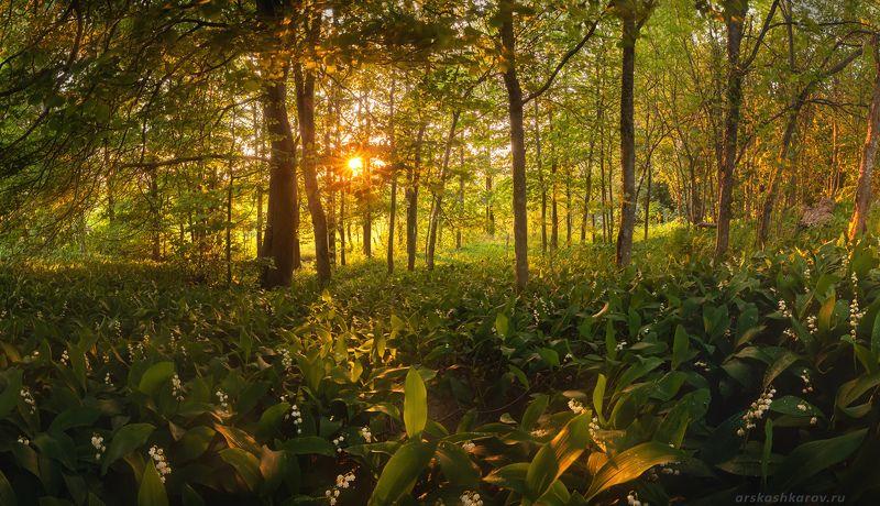 ландыши, ленинградская область, ленобласть, весенний лес \