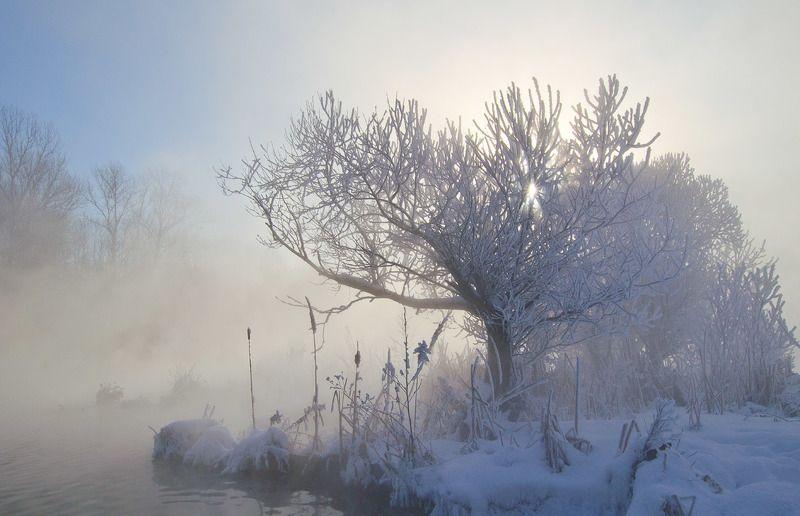зима, ивы, февраль, пейзаж, озеро горячка, косая гора Белые ивы февраляphoto preview