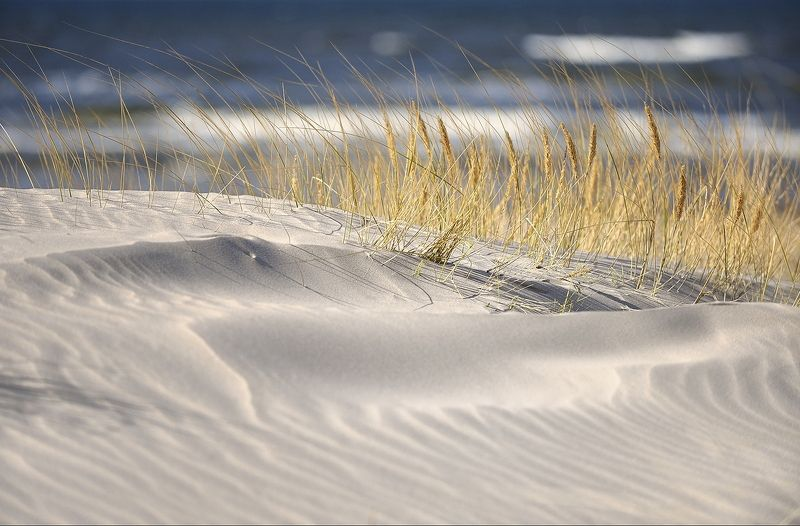 baltic sea, dune, sand, beach, sea, landscape On the dunephoto preview