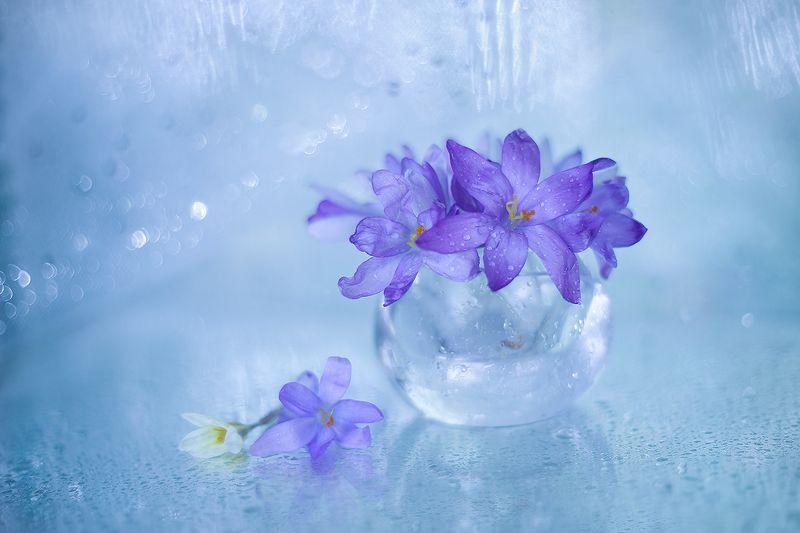 krokusy,kwiaty,przyroda ...photo preview