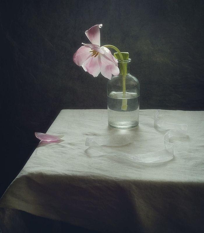 натюрморт,тюльпан,весна,цветы одинокий тюльпан...photo preview
