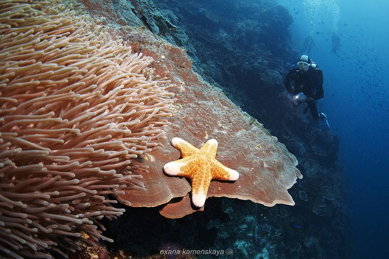 underwater  coral sea star diver blue Звездаphoto preview