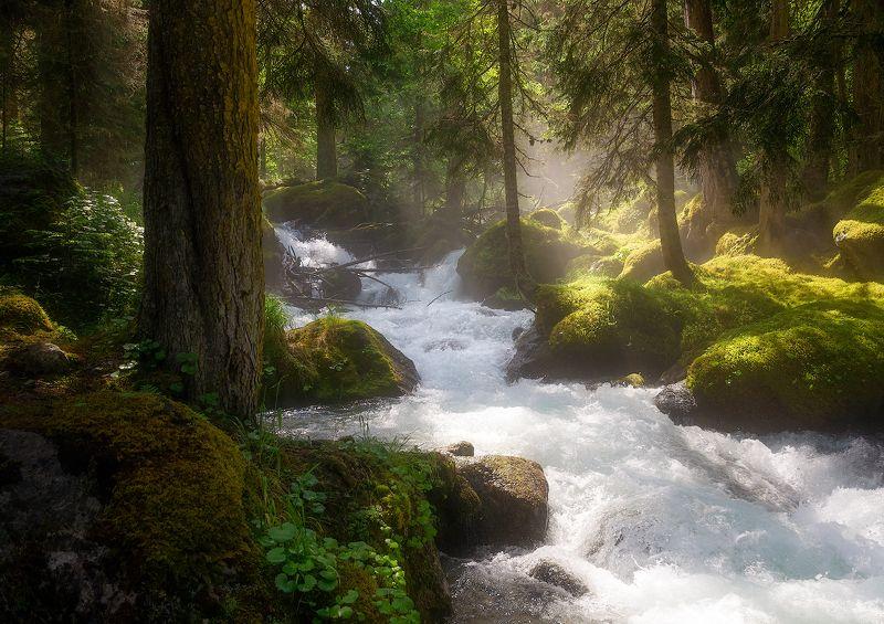 карачаево-черкессия,муруджу В горном лесу у горной рекиphoto preview