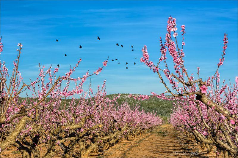 весна, пейзаж, сад, небо, птицы Веснаphoto preview