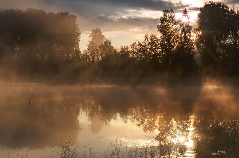 утро, рассвет, туман, болото, природа, пейзаж Волшебство рассвета)photo preview