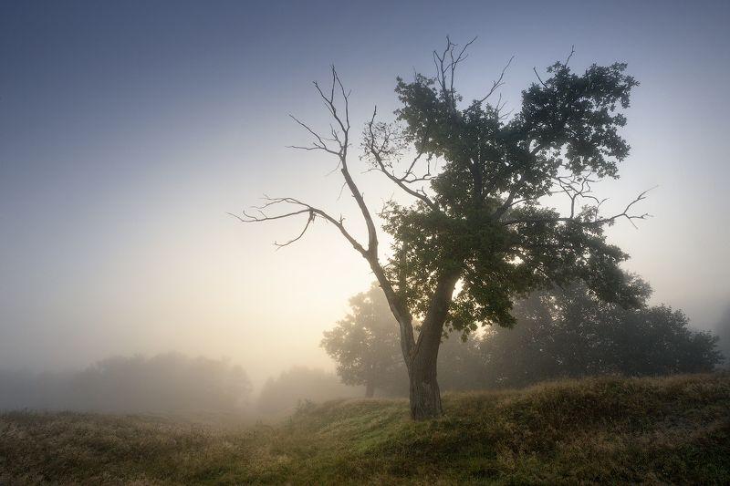 природа утро солнце туман деревья Прошлое летоphoto preview