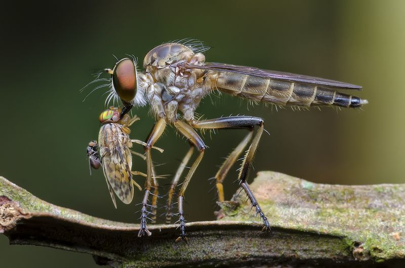 fly, dragon fly, flies, macro, insects, nature, jungle Help My Momphoto preview
