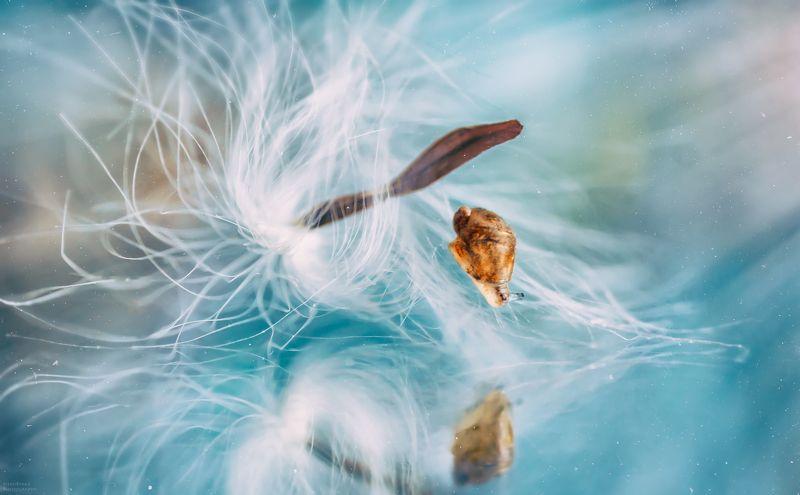 макро, пушинка, улитка, отражение, macro, fuzz, snail, reflection, ***photo preview