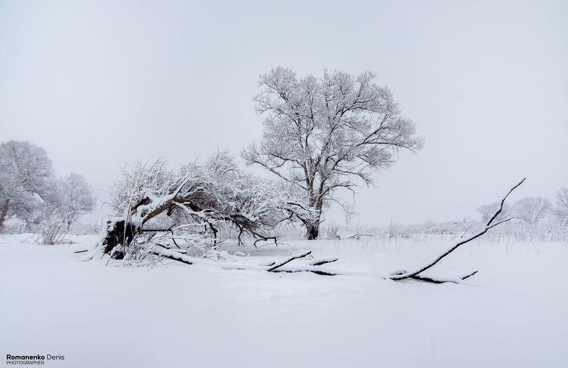 Зимние безмолвиеphoto preview