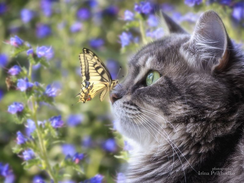 фото животных, кшка Масяня, бабочка Махаон - Мама! Что это?photo preview