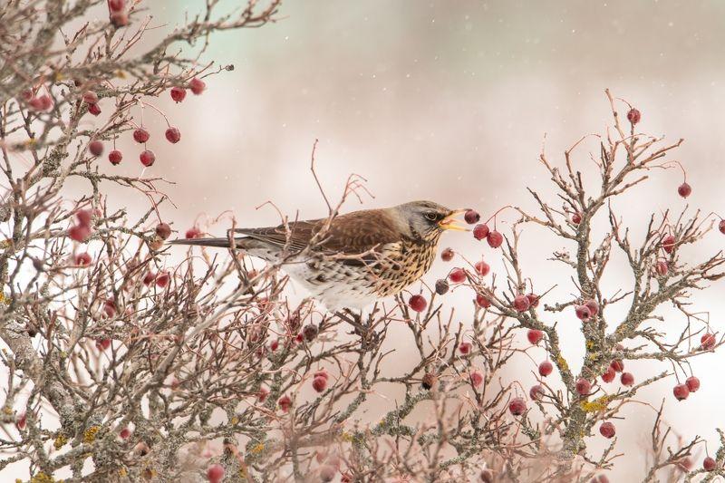 птицы, фауна, орнитология, птицы, животные Омномномphoto preview