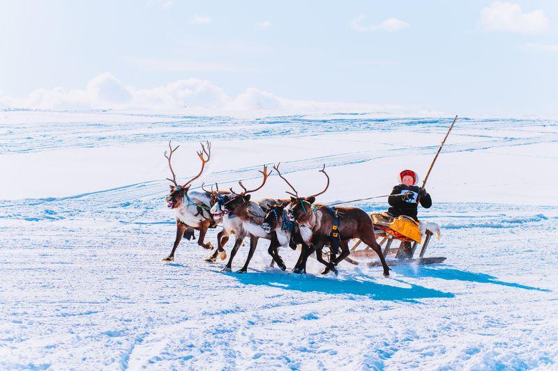 ямал ,салехард ,гонки, ямал, янао, олени, природа, полярный урал \
