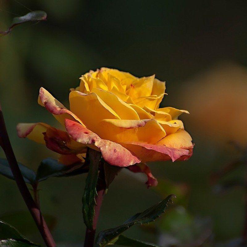 Цвет настроения жёлтый.photo preview