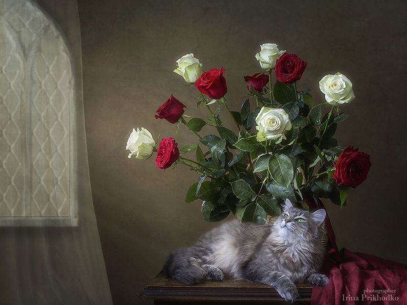 цветочный натюрморт, винтажный натюрморт, кошка масяня, букет роз Масяня под букетом розphoto preview