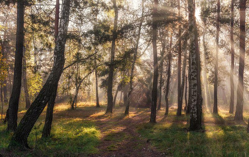 landscape, пейзаж, утро, лес,  деревья, солнечный свет,  солнце, природа, солнечные лучи,  прогулка, в солнечном лесуphoto preview
