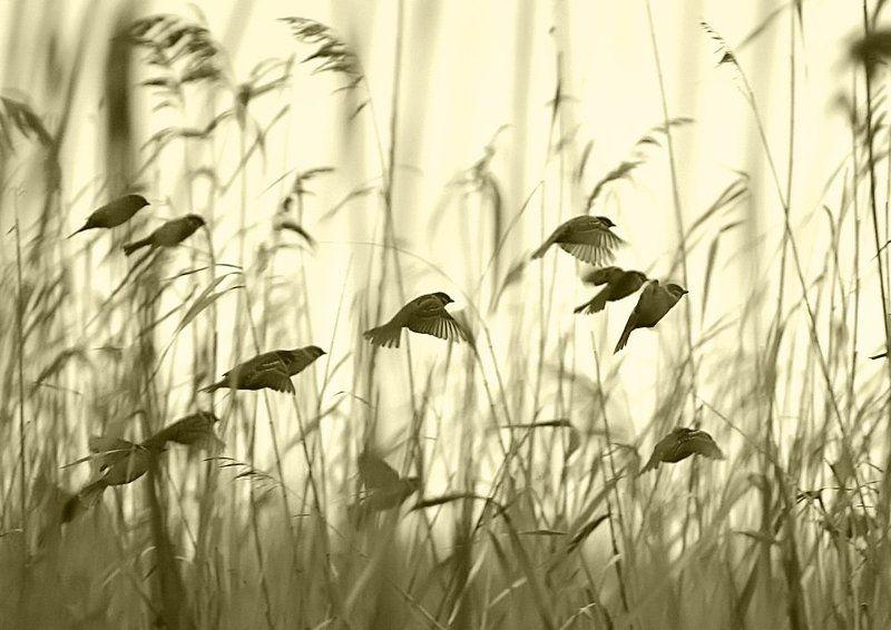 Птицы.photo preview