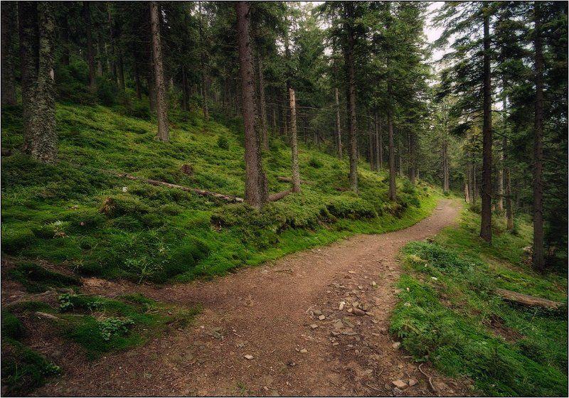 карпаты, лес, горы, утро, свежесть Гуляя по лесуphoto preview