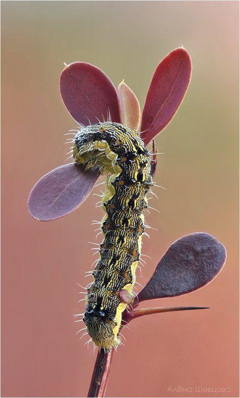 гусеница Такие ужасные и такие прекрасные.photo preview