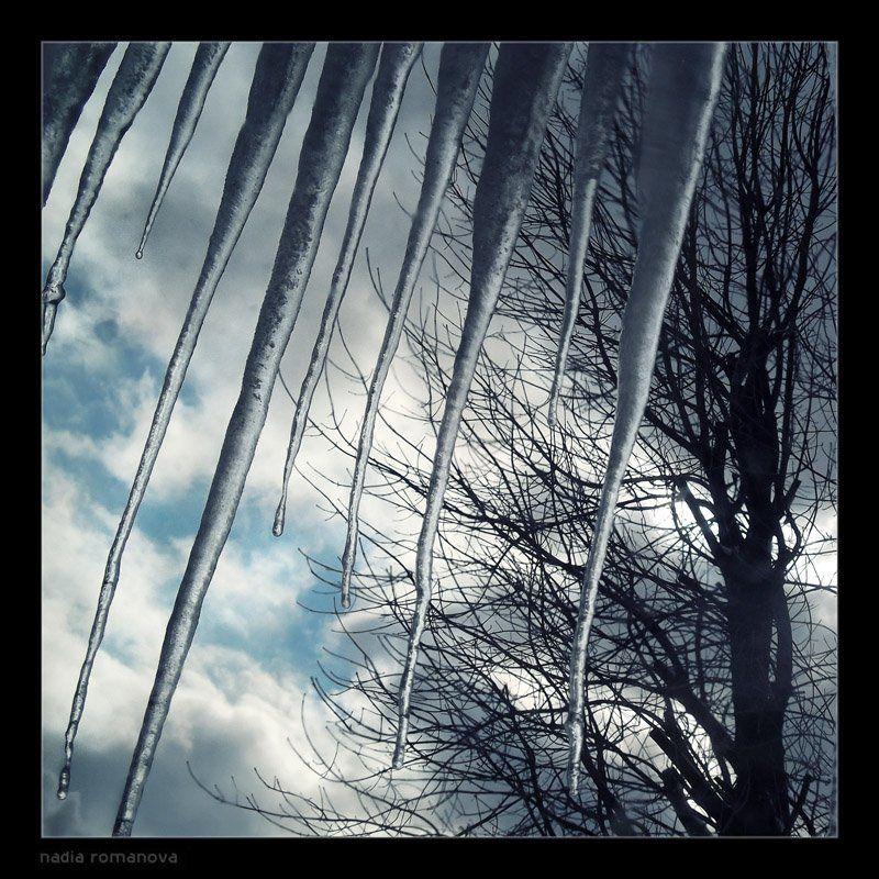winter bitesphoto preview