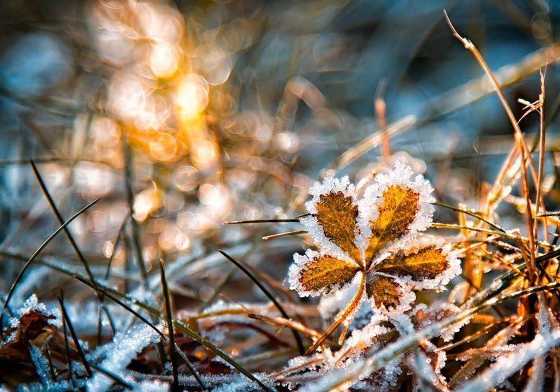 sunrise, frozen, blue, bokeh, golden, leaf The frozen 5photo preview