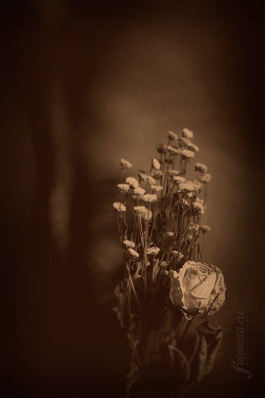 девушка, и, цветы ***photo preview
