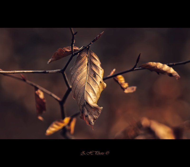 red, bokeh, branch, brown, leaf, dark I\'m not alonephoto preview