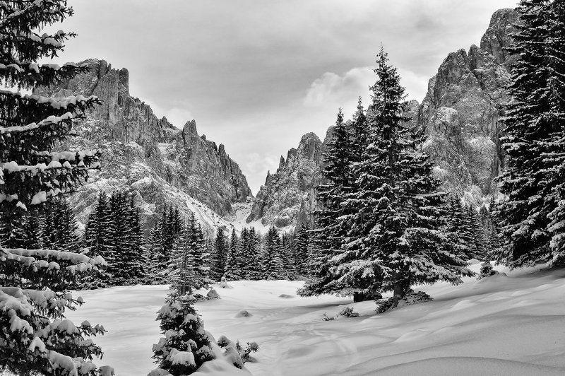 горы, снег, зима, деревья ***photo preview
