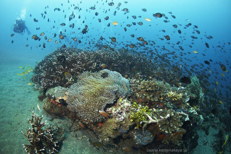 underwater  coral schoolfish anemone diver blue Вихрьphoto preview