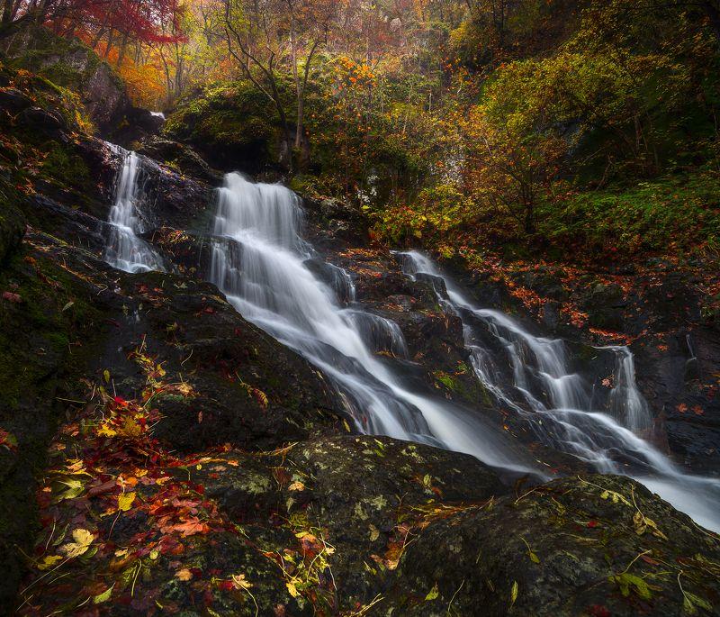 landscape nature scenery forest wood autumn river waterfall longexposure mountain vitosha bulgaria лес oсень Autumn in Vitosha Mountain фото превью