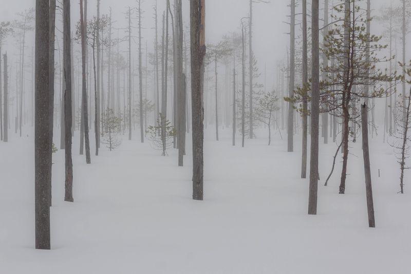 вепсский лес, болото, зима, туман туман на болотеphoto preview
