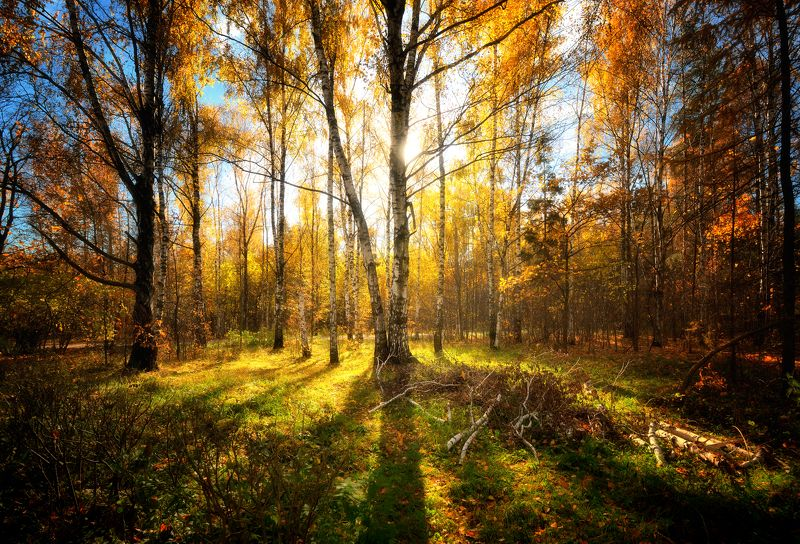 Осень в московском паркеphoto preview
