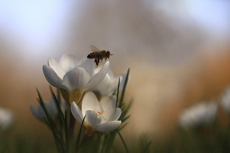 Пчелки,цветочки. Первый сбор.photo preview