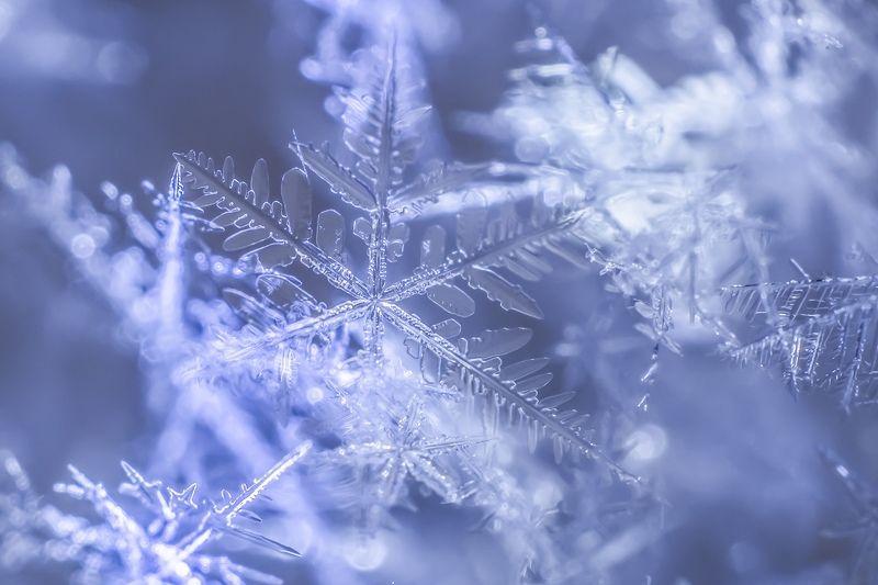 Снег .... Просто снег...photo preview