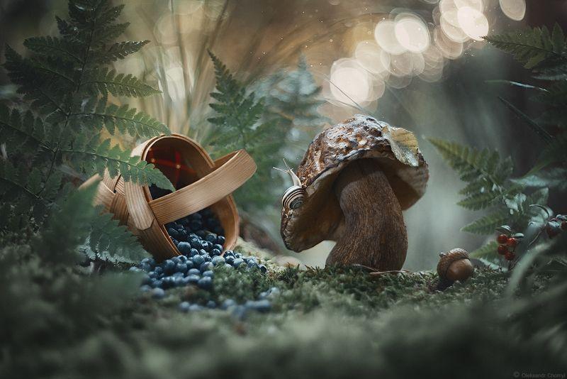 украина, коростышев, лес, природа, гриб, улитка, лукошко, ягоды, черника, мох, лето, макро, макро мир, макро красота, сказка, гармония, жизнь, радость, простота, тишина, счастье, волшебство, фотограф, чорный, \