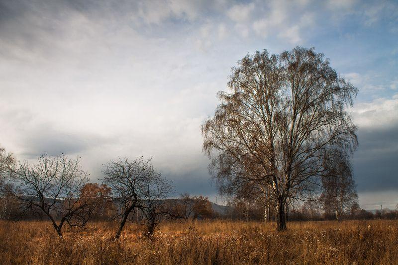 осень, поздняя осень, пасмурно * * *photo preview