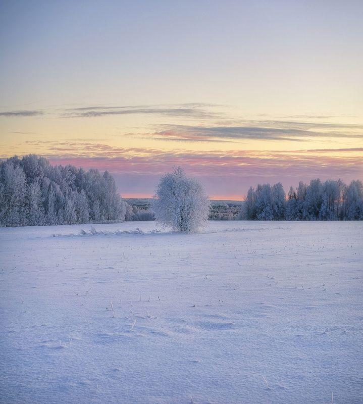 В снежной тишинеphoto preview
