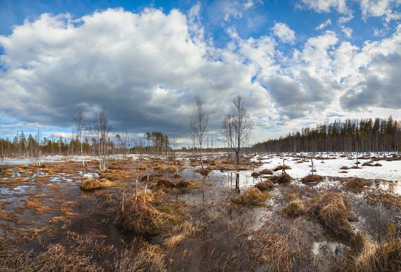 болото, топь, весна, март, ленобласть, ленинградская область, пейзаж \