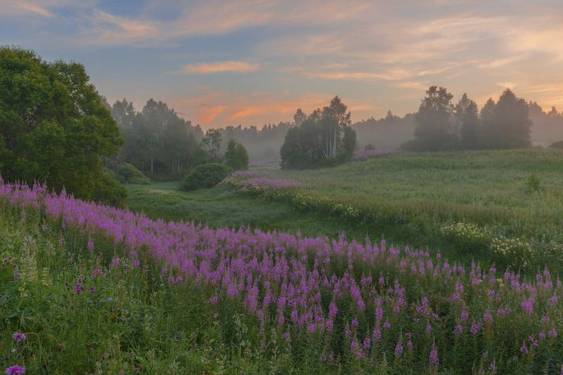 Фототуры с Владимиром Рябковым Летнее утро.photo preview