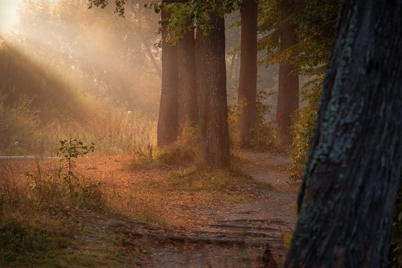 середниково, тропинка, деревья, пруд, усадьба, солнце, свет, аллея, тень, осень Тенистая тропинкаphoto preview