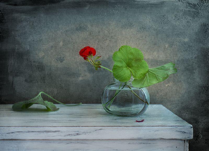 натюрморт,герань,цветы,весна с геранью...photo preview