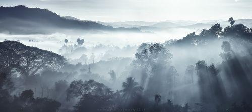 Только утренний свет и туман.