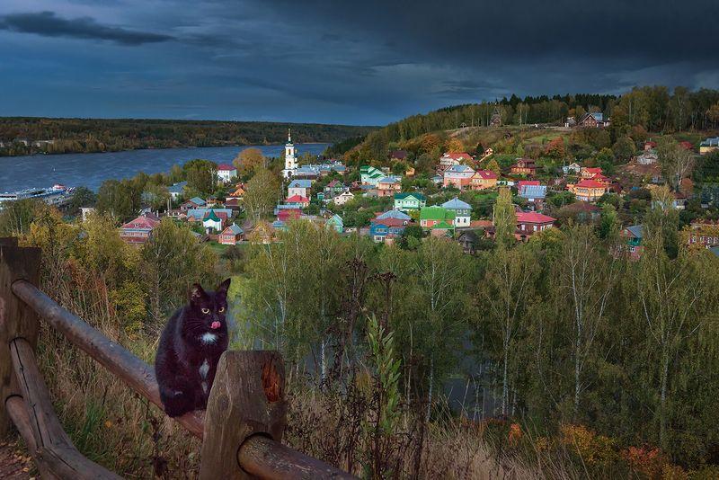 плёс, кот, закат, волга, осень, После грозыphoto preview