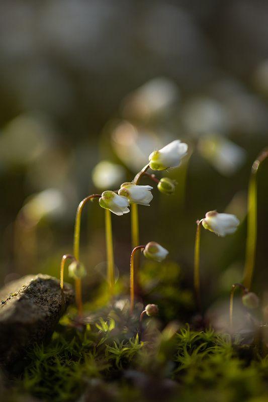 Гонцы весныphoto preview