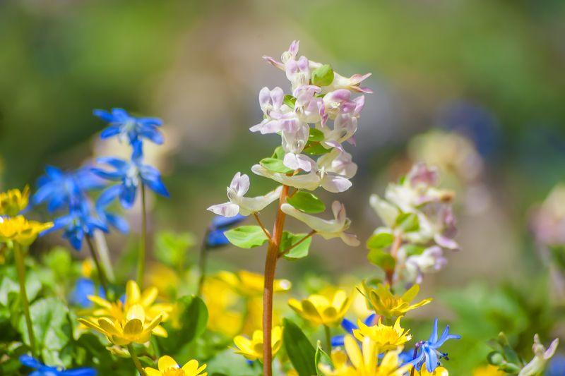 Первоцветыphoto preview